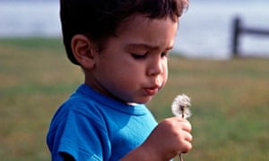 Little boy holding a dried up dandelion and blowing the seeds into the wind