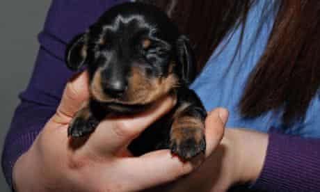 Woman holding puppy Mini-Winnie