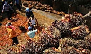 Palm fruits being unloaded at a processing plant in Indonesia