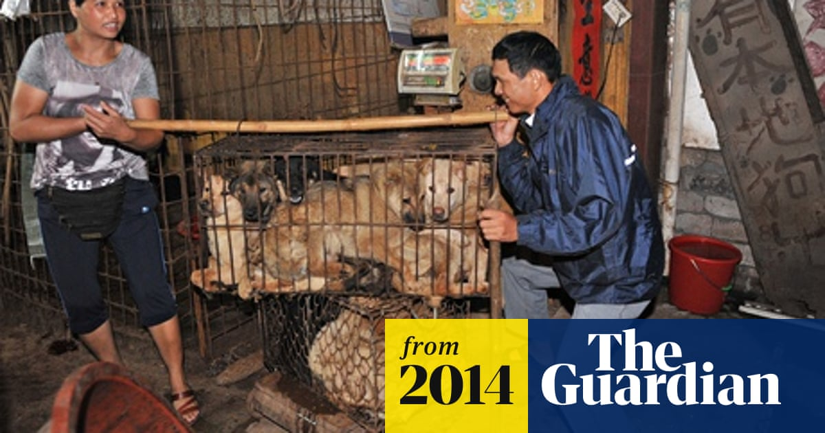 Chinese city holds dog-meat festival early to avoid animal