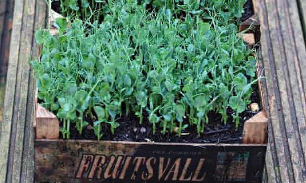 vertical veg - eat shoot and leaves