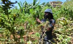 Jamaica is considering reforming its cannabis laws