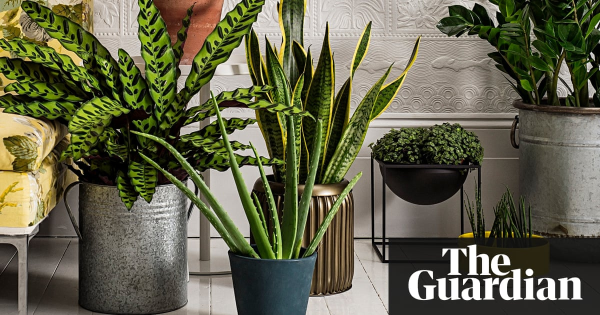 how to make the most of house plants life and style the guardian - House Plants