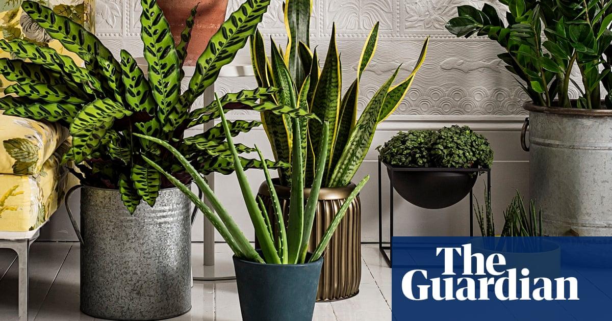 Homes-houseplants-009 Polypodiaceae House Plant on peperomia house plant, monstera deliciosa house plant, philodendron house plant, fern house plant, spanish moss house plant,