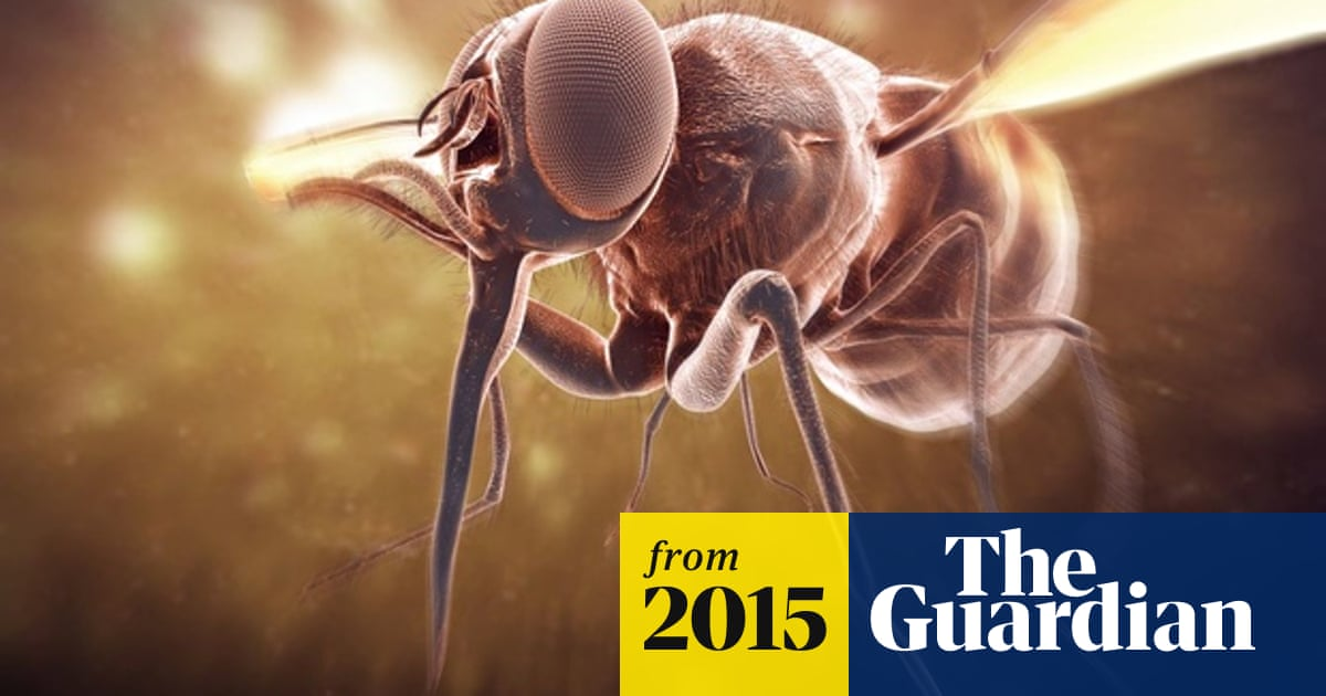 Tsetse fly: can castration end one of Africa's oldest