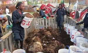 human manure composting in Haiti