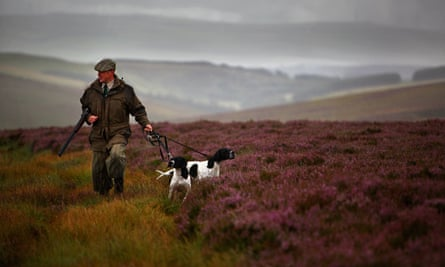 Grouse moor, Scotland