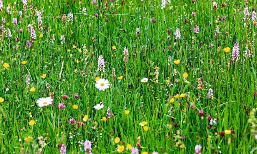 Alys Fowler: flowering lawns