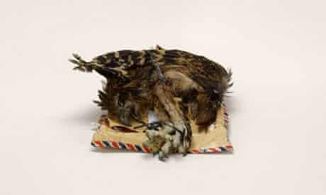 taryn simon bird corpse
