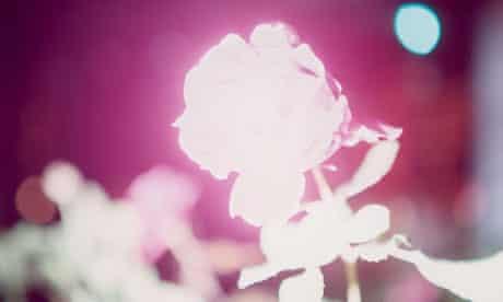 Rinko Kawauchi, Untitled, from Illuminance, 2009