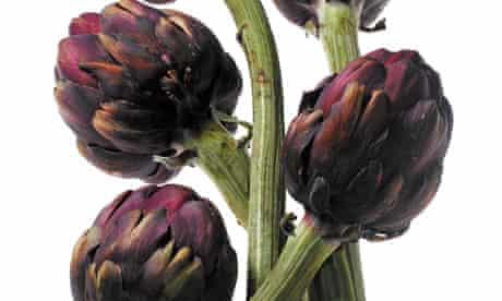 artichokes cynara