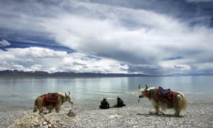 Tibetans and yaks, Tibet plateau