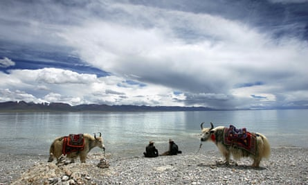 Tibetans and yaks, Tibet plateau