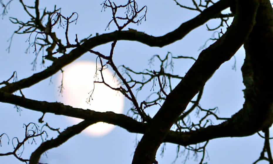 Moon shining behind tree
