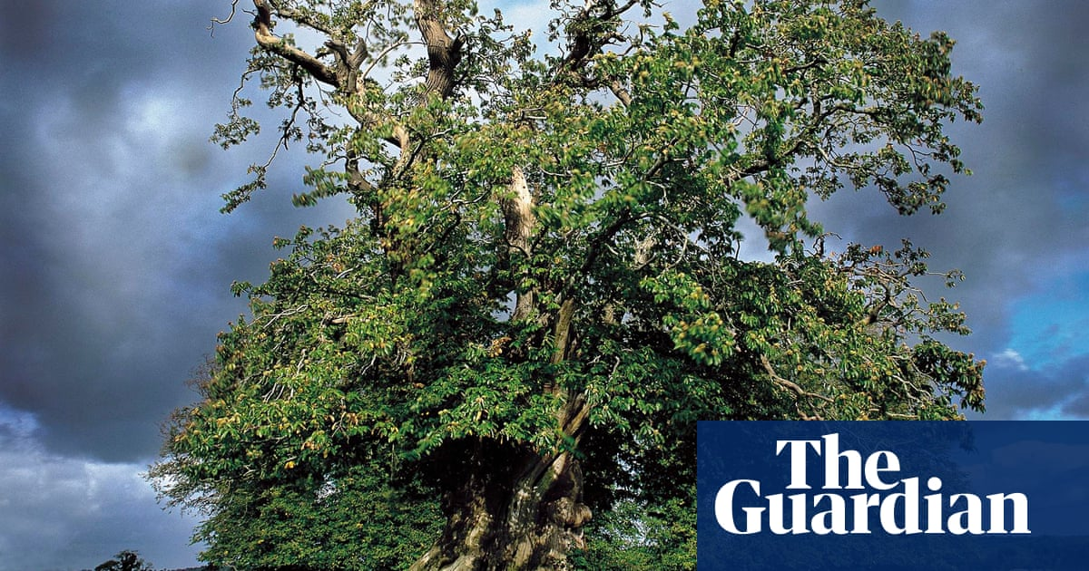 Pollen shed in rain - brings more showers | News | The Guardian