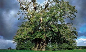 Oak tree and rain clouds