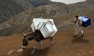 An Afghan election worker using a donkey to carry ballot boxes to remote Panjshir villages in 2010