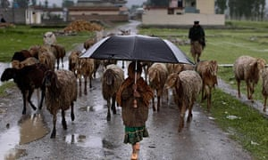 An Abbottabad girl herds sheep near Osama bin Laden's ex-home. The town feels tainted by association
