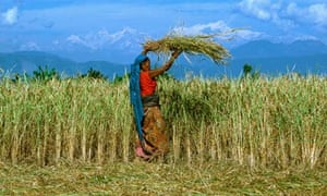 Letter from Nepal: Terai times | World news | The Guardian