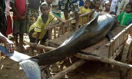 Melon-headed whale stranded in Madagascar
