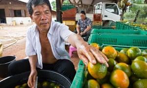 French Guiana Hmong