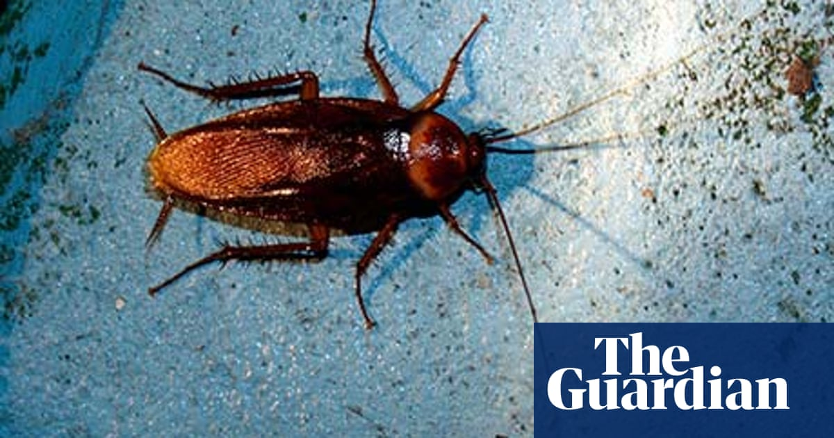 Pests that bug us have their own ecological importance
