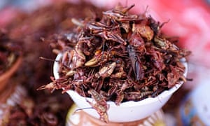 mexico insects food