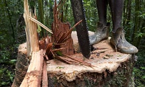 Papua New Guinea logging