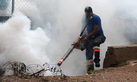 honduras mosquito dengue