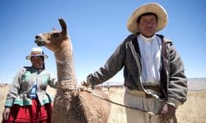 Llama farmer in Peru