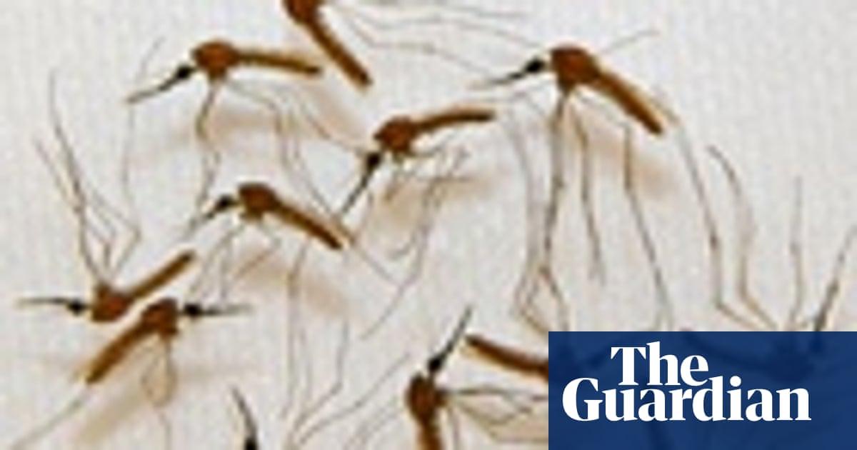 World malaria day – quiz   Global   The Guardian