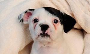 adolf hitler puppy