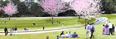 imagined Diana memorial, Hyde Park