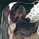 An equestrian portrait by Lucian Freud