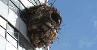 Benjamin Verdonck's nest