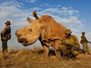Brent Stirton, South Africa, Reportage by Getty Images for National Geographic magazine