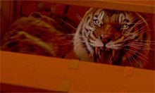A still from Ang Lee's Life of Pi