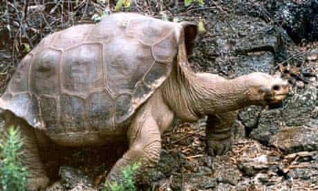 Giant tortoise Lonesome George dies