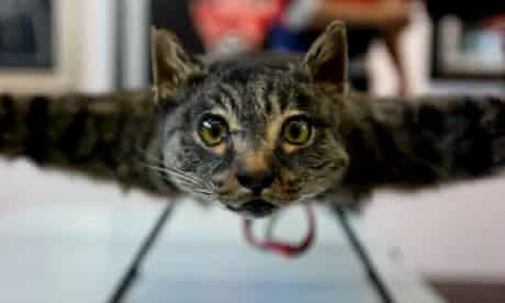 Catcopter: Dutch artist turns his dead cat into a helicopter
