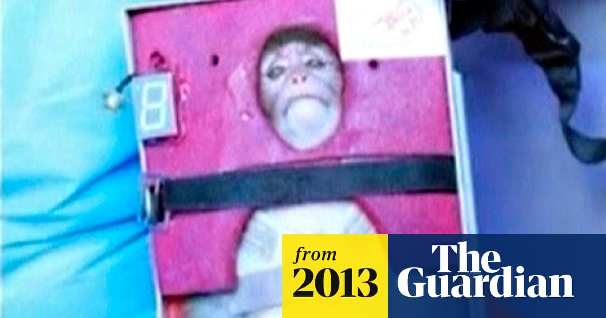 Iran launches a monkey into space – and fires warning about its ambitions