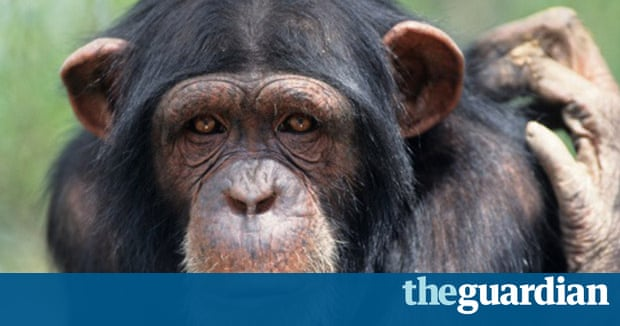 Apes homework global warming essay
