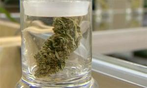 Marijuana in a shop in Denver, Colorado.