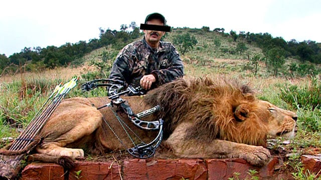 Canned hunting': the lions bred for slaughter | Environment | The