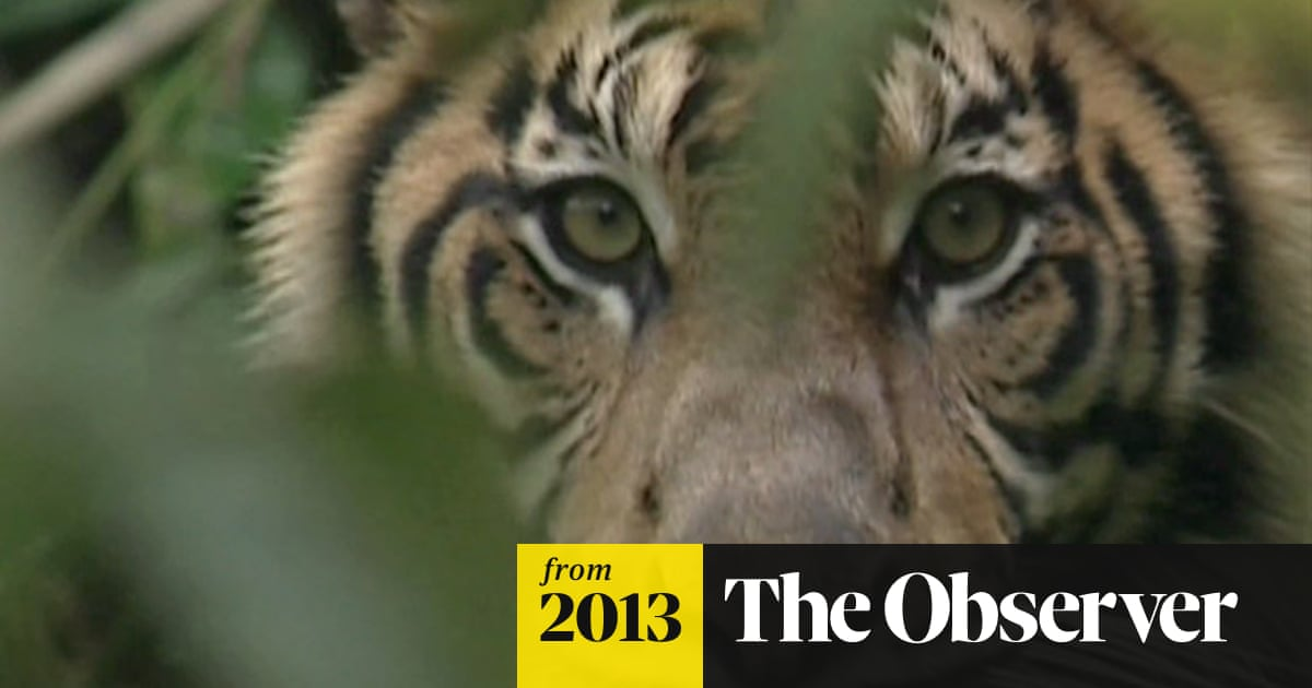 The Sumatran Rainforest Will Mostly Disappear Within 20