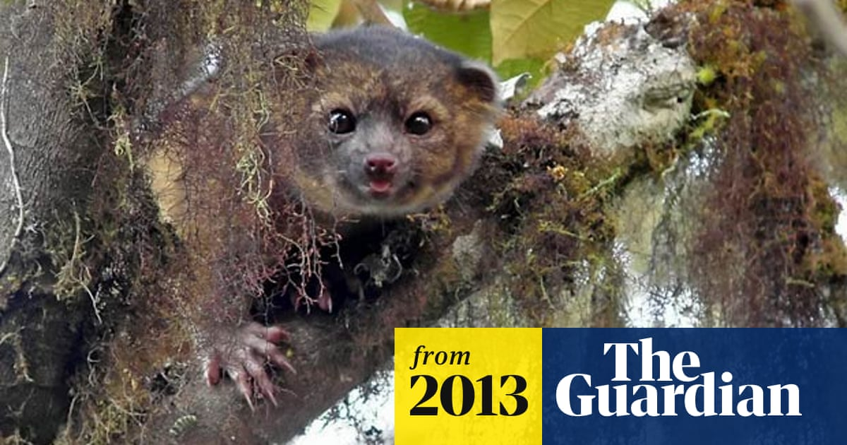 'Teddy bear' carnivore emerges from the mists of Ecuador