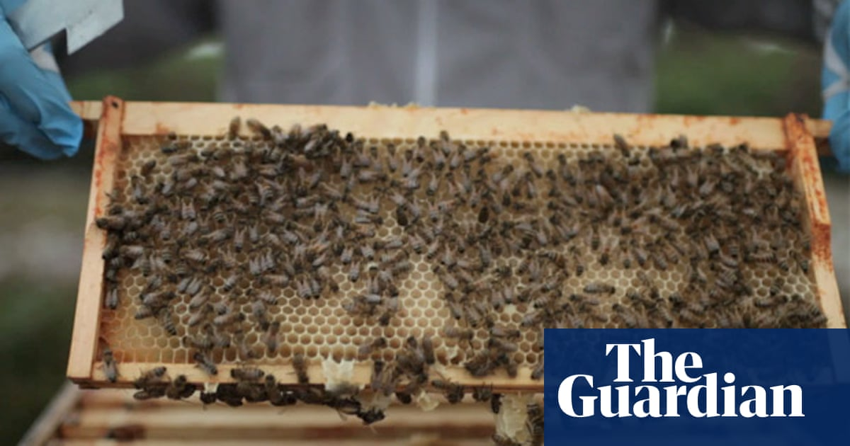 How bees make honey – video | Food | The Guardian