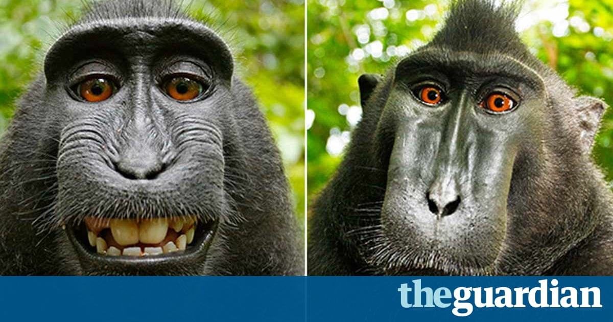 Monkey selfie photographer says he's broke: 'I'm thinking of dog walking'