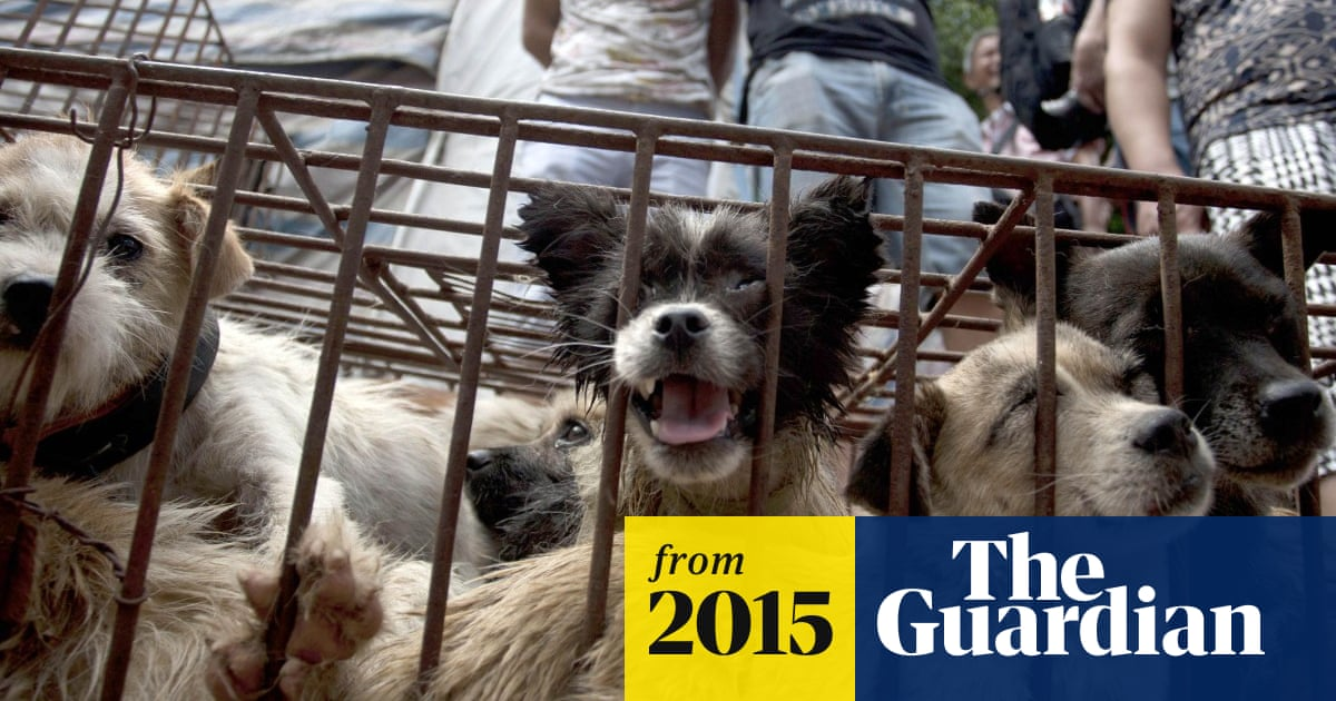 China's dog-meat festival targeted by animal rights campaigner