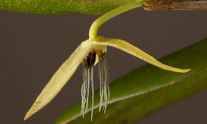 Night-flowering orchid discovered