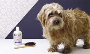 dedicated grooming areas will help keep mess to a minimum
